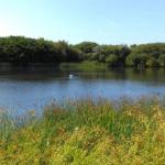 Sands Lake 1